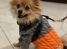 acrylic wool dog crochet sweater with legs pattern