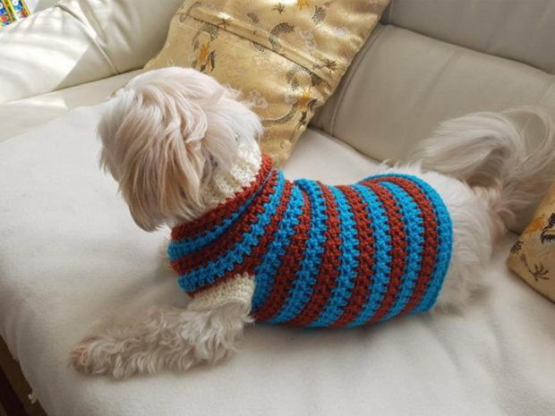 LOU LOU SPORTY DOG SWEATER PATTERN BY TRENDY CROCHETING