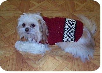 "UNIQUE CROCHET DOG SWEATER PATTERN - ""DOGGIE COATS"""