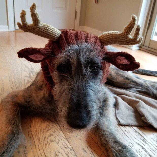 halloween christmas crochet dog costume dress up