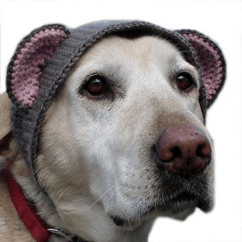 Crochet Hat Costume Pattern For Large Dogs by X Moon Bloom