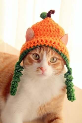 Crochet Pumpkin Hat For Cats Pattern by Pawsome Crochet