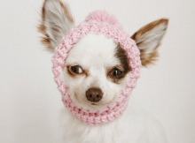 Toy Chihuahua Crochet Hat Pattern by Because Of Crochet