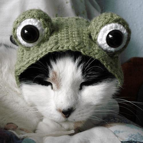 Crochet Frog Hat For Pet Pattern by X Moon Bloom