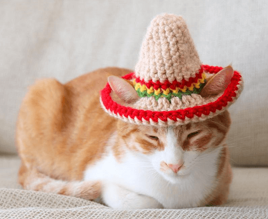 Cat Sombrero Crochet Pattern by Pawsome Crochet