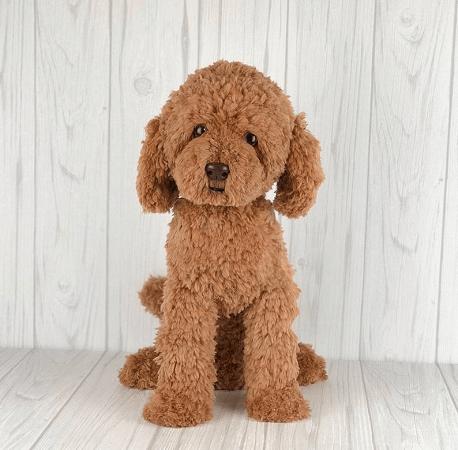 Crochet Dog Amigurumi Pattern by Amber Craft Store