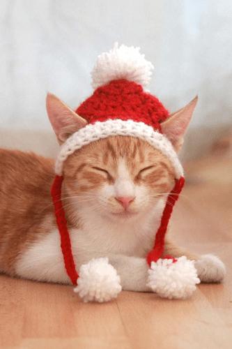 Santa Cat Hat Crochet Pattern by Pawsome Crochet