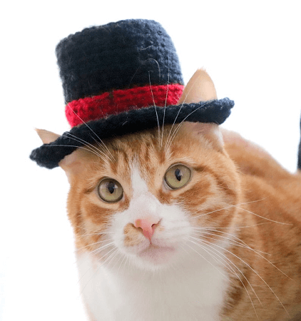 Top Hat For Cats Crochet Pattern by Pawsome Crochet