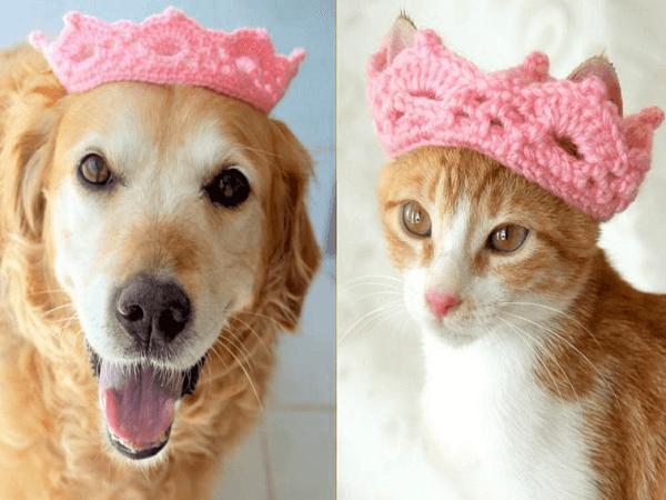 Crochet Pet Crown Pattern by Pawsome Crochet