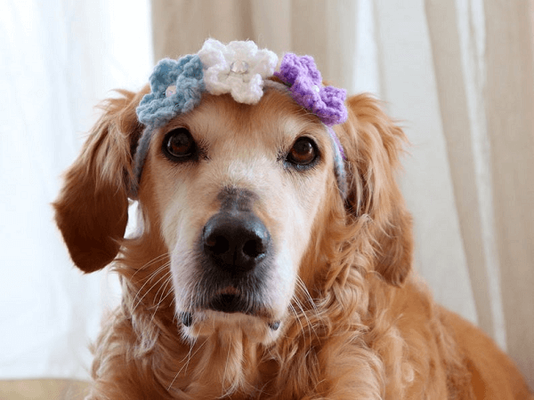 Stacking Flower Headband Crochet Pattern by Pawsome Crochet