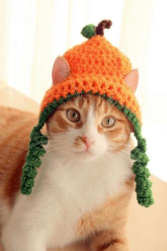 Crochet Pumpkin Cat Hat Pattern by Pawsome Crochet