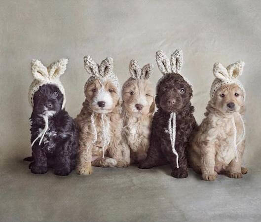 Dogs Hat Bunny Ears Crochet Pattern by Dogs And Hats
